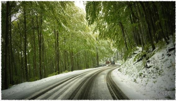 Foglie verdi e neve... - Clicca per ingrandire