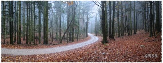 Strada nel bosco - Clicca per ingrandire