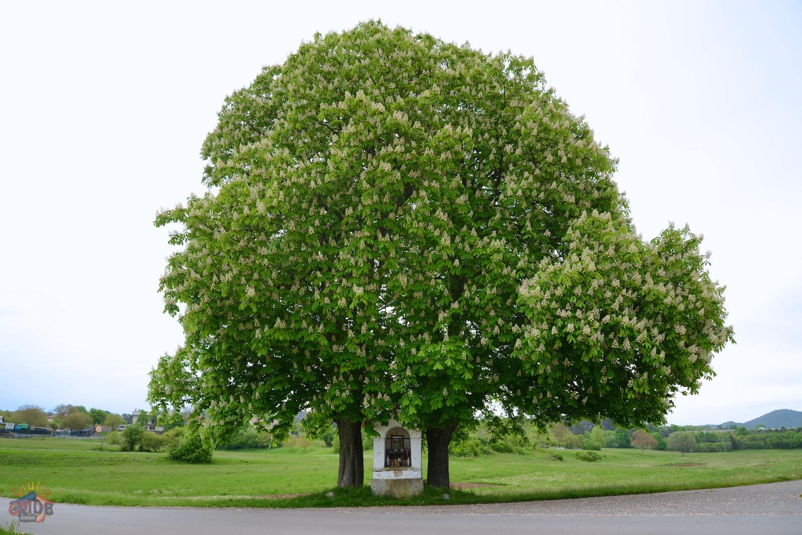 Giulio gmdb una vita insieme for Chioma albero
